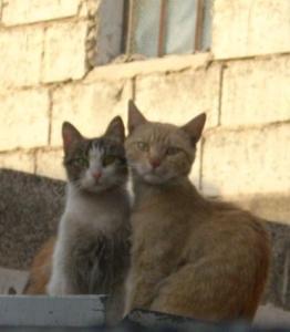 Küchen-Katzen IV