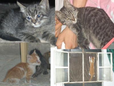 Küchen-Katzen II