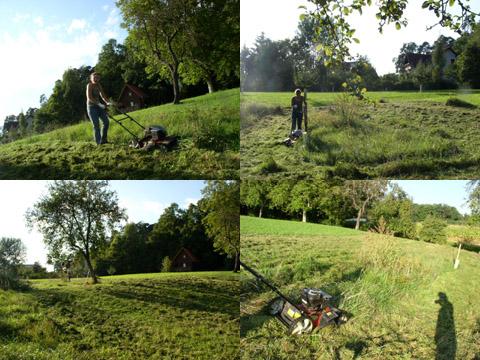 Martina cutting the Wd8 grass