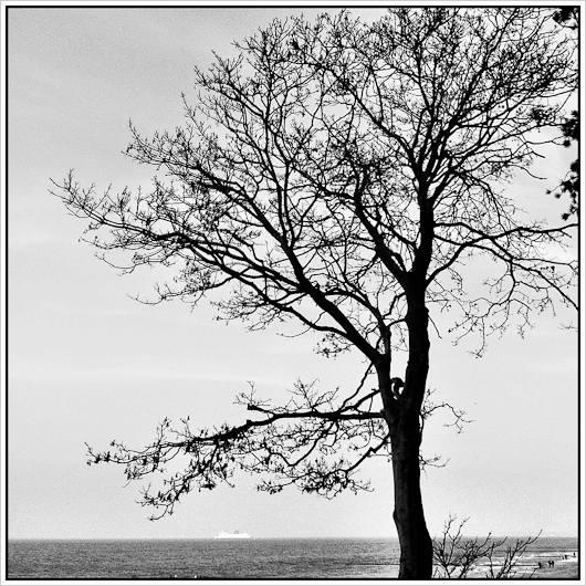 Blattloser Baum vor Meer