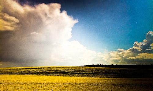Rapsfeld vor blauem Himmer mit Wolken