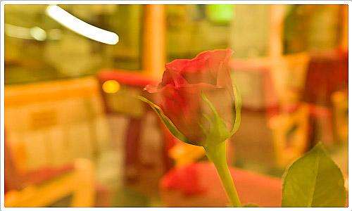 Rose hinter einer Glasscheibe