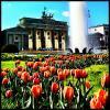 Tulpenblüte vor dem Brandenburger Tor