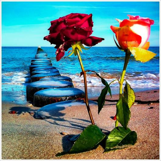 Zwei Rosen im Sand am Meer