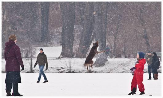 Springender Hund auf dem zugrfrorenen Weissensee