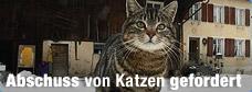 vogelgrippe_katze_abschuss_2q_r