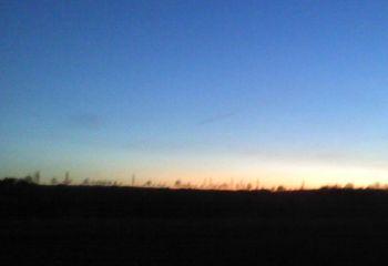 Baum-Silhouette am Abend (Vorschaubild)
