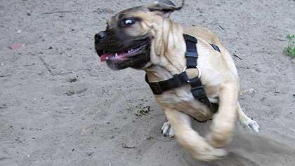 hund11